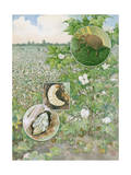 Painting of the Life Cycle of a Boll Weevil Photographic Print by Hashime Murayama