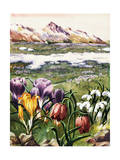 Crocus, Snowdrops, and Checkered Lily Bloom on an Alpine Meadow Giclee Print by Else Bostelmann