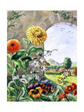Pot Marigolds, Bellflowers, Daisies, Pansies, Cowslip, Polyanthas Giclee Print by Else Bostelmann