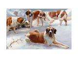 Saint Bernard Dogs Help to Save Half-Frozen War Refugee Photographic Print