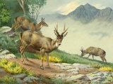 Painting of Peruvian Huemul Grazing on the Andes Slopes Photographic Print by Walter Weber