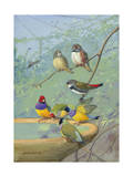 Finches Perch on the Edge of a Birdbath Photographic Print by Allan Brooks