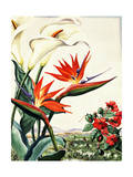 Portrait of Bird-Of-Paradise, Impatiens, and Calla Lily Flowers Giclee Print by Else Bostelmann