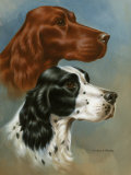 Portraits of Irish and English Setters Photographic Print by Walter Weber