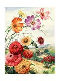 Cosmos, Zinnias, and Poinsettia Grow in Oaxaca, Mexico Giclee Print by Else Bostelmann