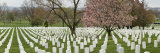 Panorama of Arlington National Cemetery in the Spring Photographic Print by Greg Dale