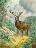 Schomburgk Deer Looks Alert as it Crosses Through the Forest Photographic Print by Walter Weber