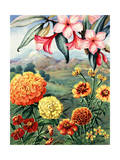 Portrait of Frangipani and Marigolds Native to Mexico Giclee Print by Else Bostelmann