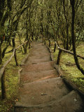 Dirt Hiking Path Through the Garajonay National Park on La Gomera Photographic Print by  xPacifica