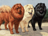 Three Chows Have Fur of Different Colors Photographic Print by Walter Weber