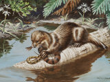 Otter Captures and Eats a Water Snake Photographic Print by Walter Weber