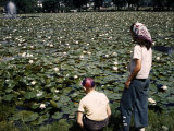 Two People Gaze at a Lily Pond That Was Once a Bicycle Track Photographic Print by Volkmar K. Wentzel