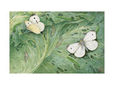 Painting of Pupa and Adults of European Cabbage Butterflies Photographic Print by Hashime Murayama