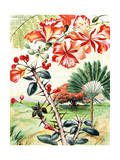 Portrait of Flamboyant Tree, Crown-Of-Thorns, and Travelers Tree Giclee Print by Else Bostelmann