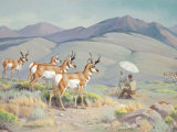 Pronghorns are Attracted to the White of an Artist's Sun Umbrella Photographic Print by Walter Weber