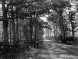 Both an Old-Fashioned Rail and an Utilitarian Fence Line These Woods Photographic Print by Clifton R. Adams