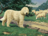 Komondor Dog Guards Sheep Herd from Predators But Does Not Herd Them Photographic Print by Walter Weber