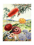 Portrait of Flowers and Tree Native to Australia Giclee Print by Else Bostelmann