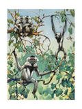 Black-Capped Gibbons Travel at High Speeds on the Ground and in Trees Photographic Print by Elie Cheverlange
