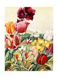 Portrait of Tulips in a Turkish Setting Giclee Print by Else Bostelmann
