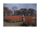 Woman Stands Among Scarlet Salvia Flowers in a Washington D.C. Park Photographic Print by Clifton R. Adams