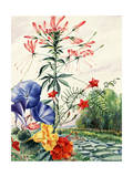 Portrait of Flowers Native to South American Jungles Giclee Print by Else Bostelmann
