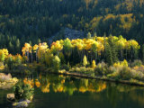 Aspen and Pine Trees Streaked in Sunlight in Aspen, Colorado Photographic Print by Charles Kogod