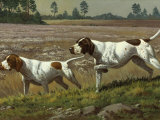 Pointers, Crossbred for Centuries, Hunt with Speed and Determination Photographic Print by Walter Weber