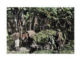 Two Men and a Mule Stand with Freshly Cut Bananas Waiting to Be Sold Photographic Print by Jacob Gayer