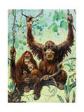 Sumatran Orangutans Live a Peaceful Life in Swampy Jungles Photographic Print by Elie Cheverlange