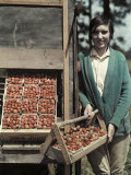Boy Stands by Strawberries That Will Be Made into Jams and Jellies Photographic Print by Edwin L. Wisherd