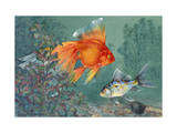 Veiltail and Shubunkin Swim Together Through Ludwigia Photographic Print by Hashime Murayama