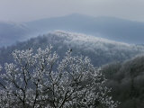 Birds Rest on Rime Ice-Tipped Tree Branches Overlooking the Mountains Photographic Print by  White & Petteway