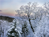 Snow-Laden Branches are in Contrast to the Pastels of a Mountain Dawn Photographic Print by  White & Petteway