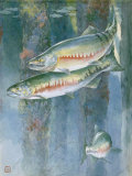 Painting of a Trio of Chum Salmon Photographic Print by Hashime Murayama