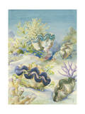 Giant Clams Lay Embedded in Sand Giclee Print by Else Bostelmann