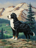 Bernese Mountain Dog Stands on a Hill Overlooking a Rural Valley Photographic Print by Walter Weber