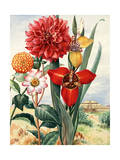 Dahlias and Tiger Flowers Bloom Near Temple of the Sun in Mexico Giclee Print by Else Bostelmann