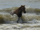 Horse Rides the Waves in the Atlantic Ocean Photographic Print by Stacy Gold