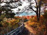Fence-Lined Path Leads to a Mountain Meadow Rich with Autumn Color Photographic Print by White & Petteway