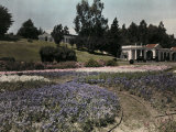 View of Cypress Lawn's Landscaped Grounds Photographic Print by Charles Martin