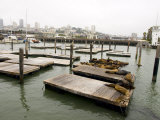 Famous Pier 39 Docks That are Usually Crowded with Sea Lions Photographic Print by Stacy Gold