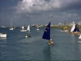 San Juan's Winter Regatta Brings Comet Class Yachts to the Harbor Photographic Print by Edwin L. Wisherd