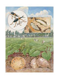Painting of Sweet Potato Weevils and the Plants They Damage Photographic Print by Hashime Murayama