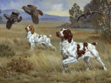 Brittany Spaniels Flush Three Birds from Cover in a Meadow Photographic Print by Walter Weber