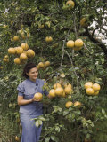 Woman Holds One of the Local Abundant Citrus Fruits, a Grapefruit Photographic Print by Edwin L. Wisherd