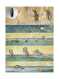 Life Cycle of Aedes Aegypti, the Mosquito That Carries Yellow Fever Photographic Print by Hashime Murayama