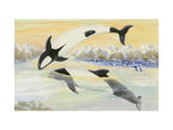 Commerson's Dolphins Frolic in the Stormy Strait of Magellan Giclee Print by Else Bostelmann