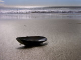 Mussel Shell Holding Water Near Surfs Edge on a Beach Photographic Print by  White & Petteway