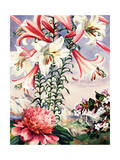 Regal Lilies, Peonies, and Abelia Flowers are Native to China Giclee Print by Else Bostelmann